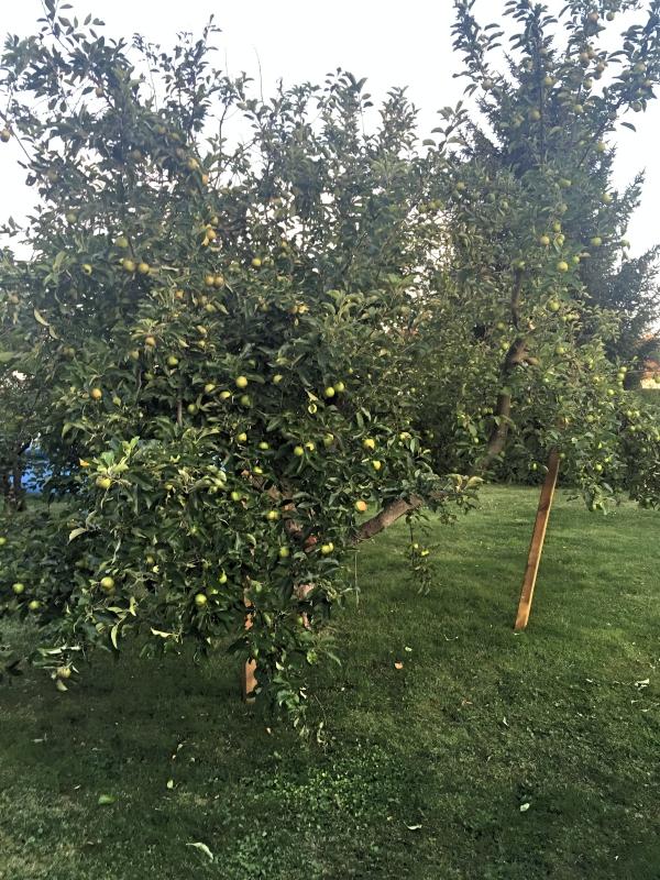 äppel2_Fotor