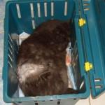 Und wieder eine kranke Katze….