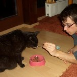 Katzenfrage
