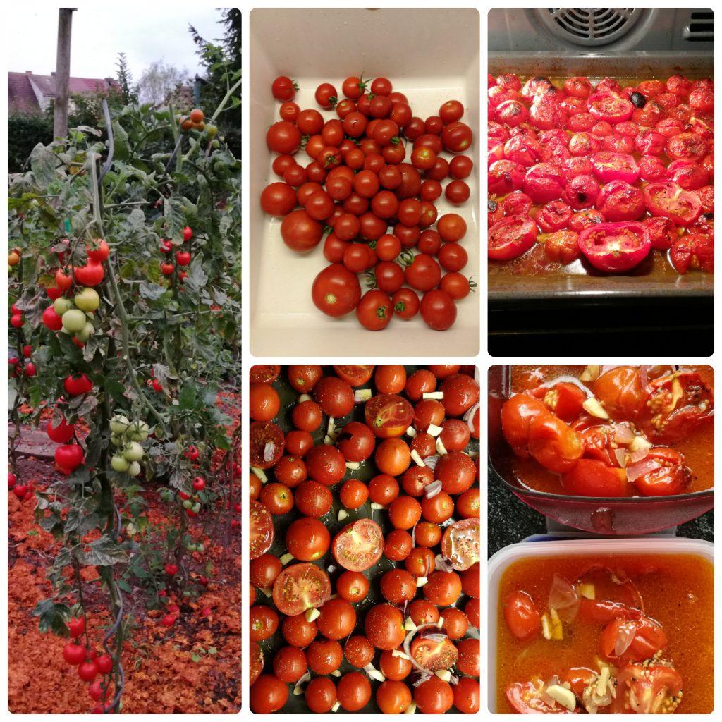 collage_tomaten