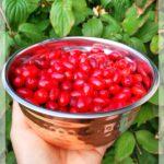 Gartenfruchtverarbeitung – extrem